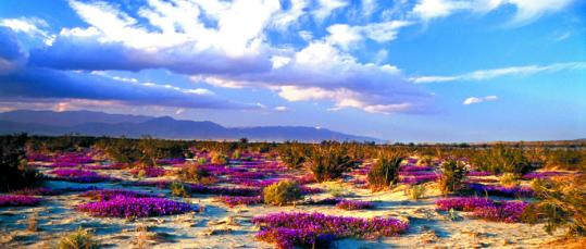 Anza-Borrego Desert, Photo by Stephen Peel